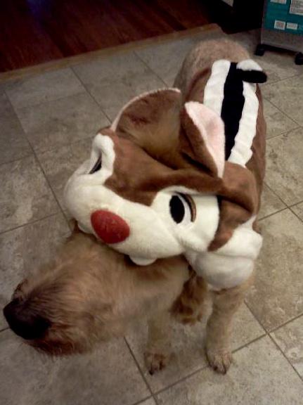 There ... & pet costumes u2013 Go Jules Go