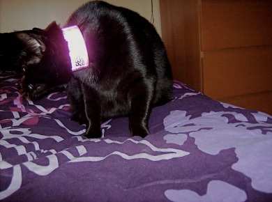 ThoughtsAppear_bracelet-cat