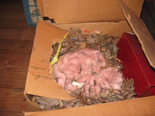 attic-nest