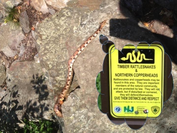 Hike-12-dead-snake