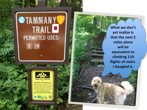 Hike-5-Tammany-trailhead