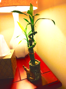 Or you could just wait for your friend to give you a lucky bamboo. (DUDE. THIS THING WORKS.)
