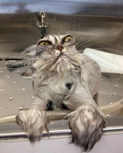 Fail-wet-cat