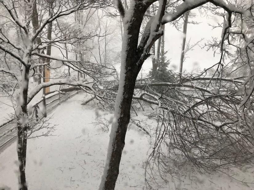 snow-tree-down