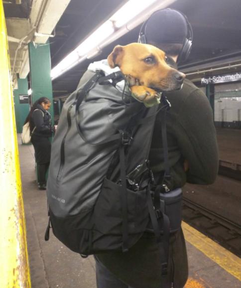 dog-in-duffle-bag
