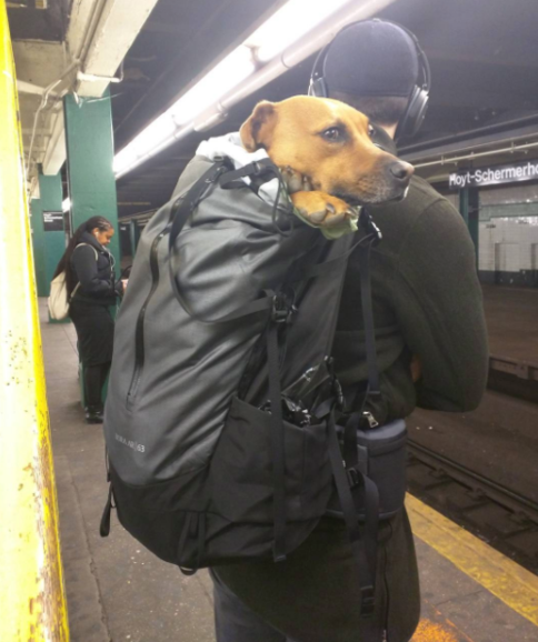 dog-in-duffle-bag