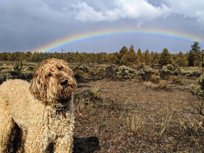 Uncle Jesse double rainbow Maston 2020