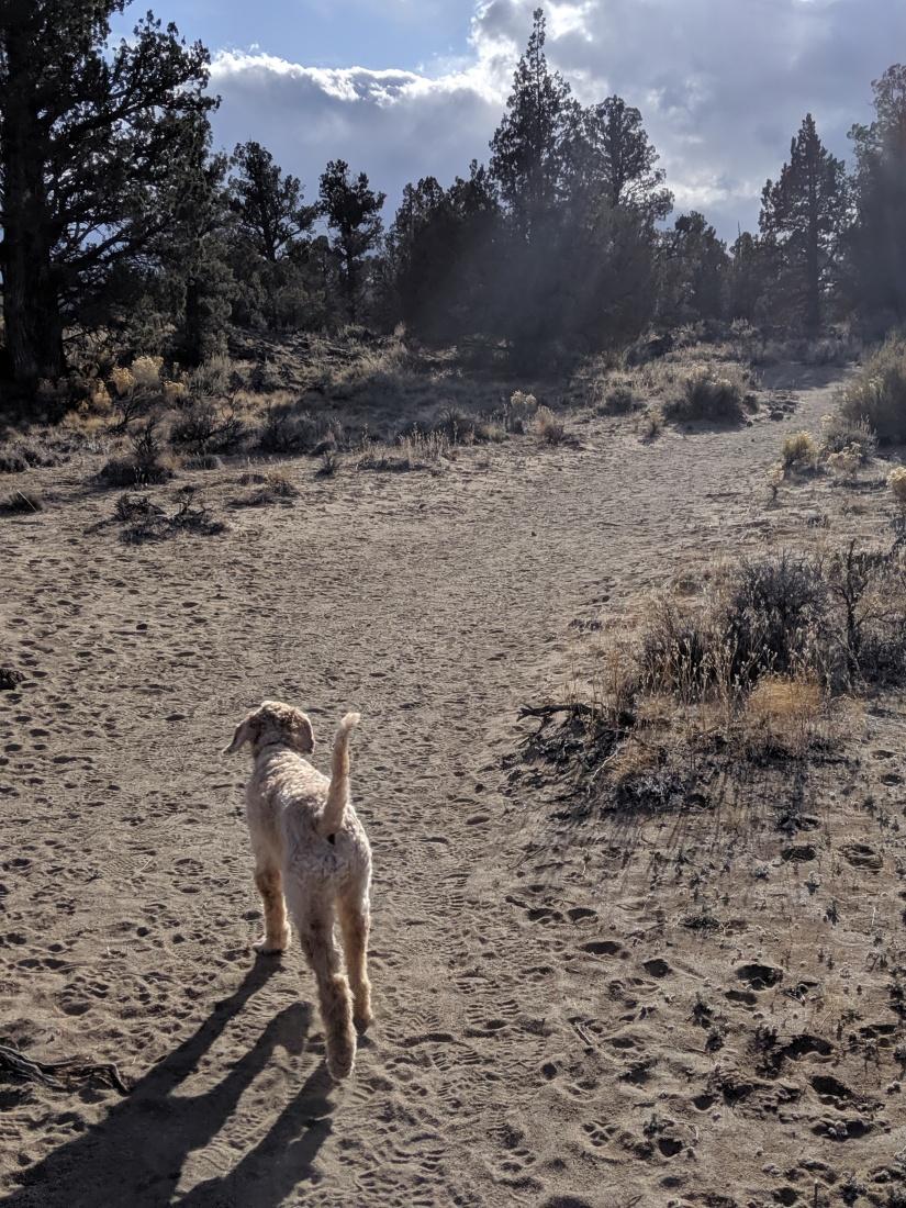Uncle Jesse sandy trail