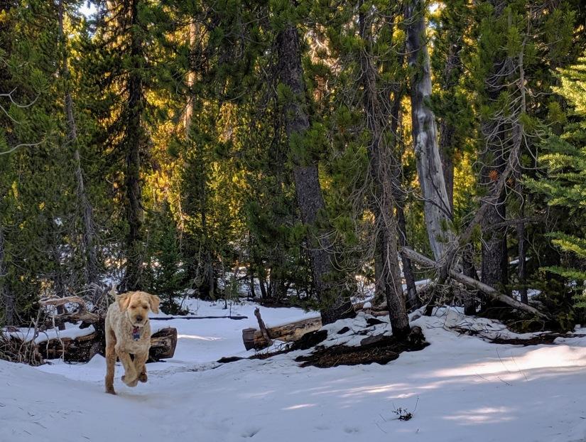 Uncle Jesse snow romp 2 Cascades 2019